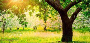 Где на земле находится райский сад Эдем (точное место)?