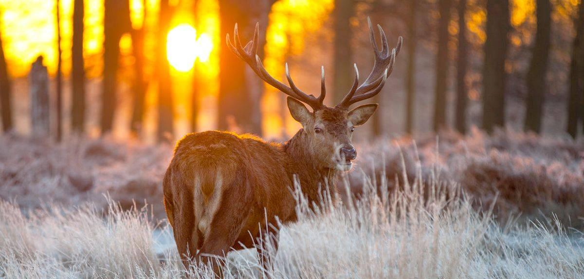 Есть ли душа у животных по Библии - чему учит христианство?