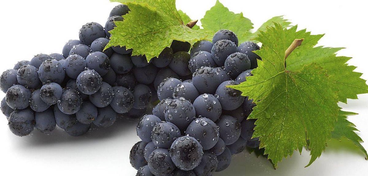 Книга пророка Осии и виноградные лепешки