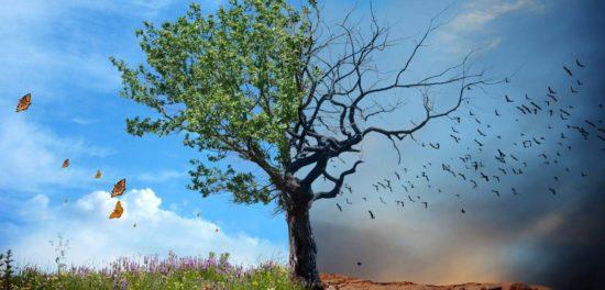 Дерево познания добра и зла в райском саду - зачем Бог его посадил?
