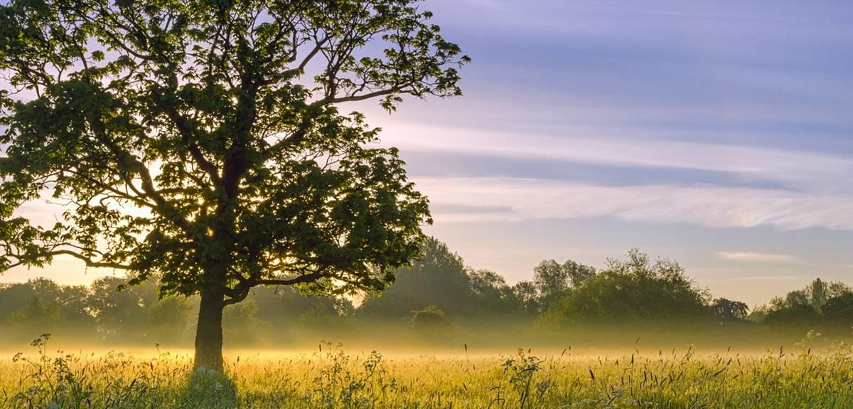Где находится эдемский сад на земле согласно Библии?