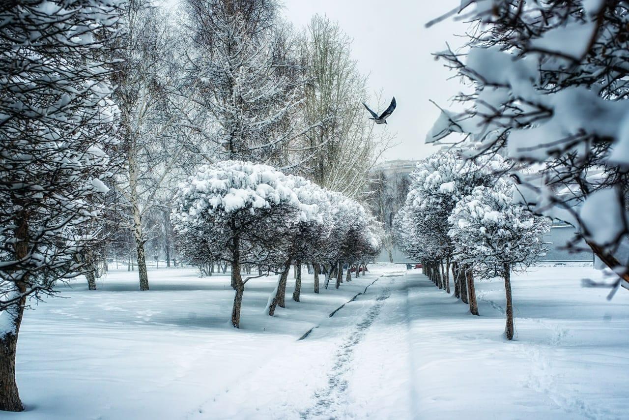 Екатеринбуржец победил в конкурсе фотографии National Geographic