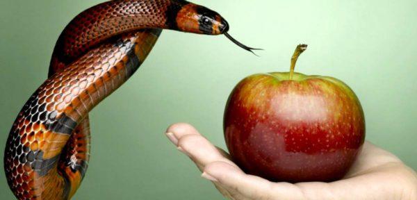 Адам и Ева были бы бессмертны без греха?