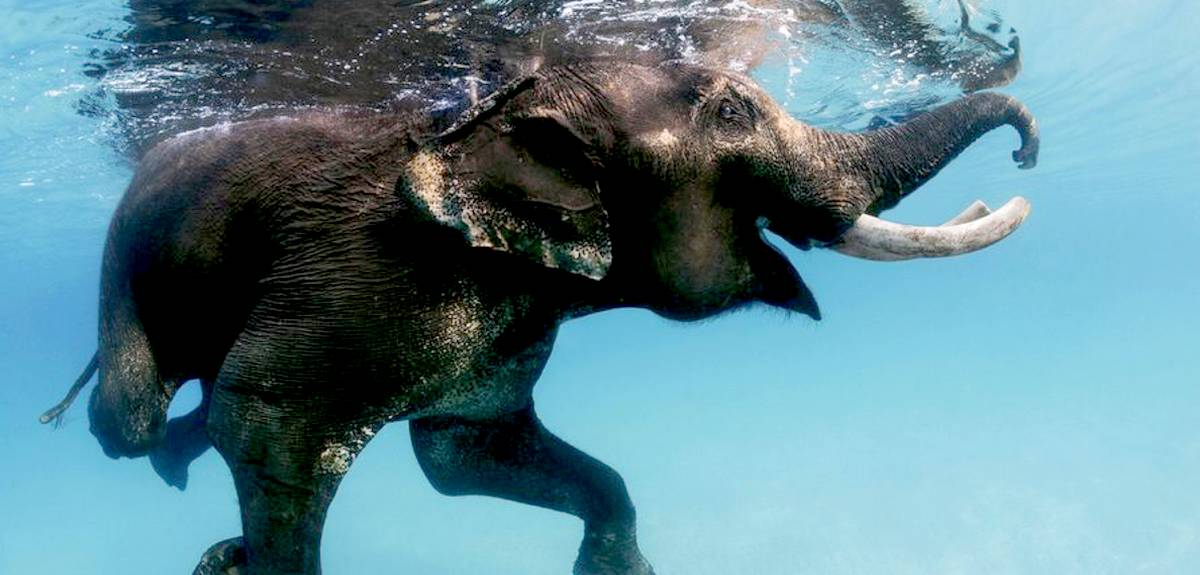 Почему Бог уничтожил животных во всемирном потопе?
