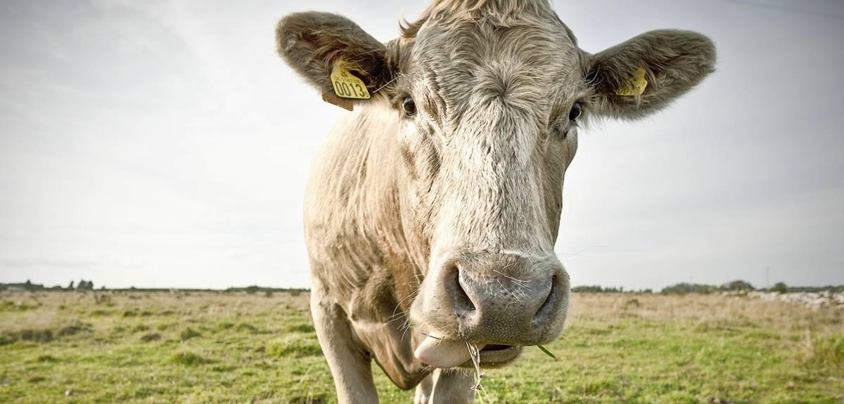 Чистые и нечистые животные в Библии — полный список