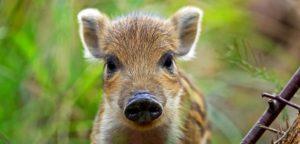 Можно ли есть мясо животных по Библии и этично ли убивать их?
