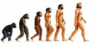 Может ли современный христианин верить в теорию эволюции?